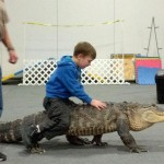 Boy Rides Bubba The Alligator
